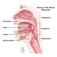 004-labextrade.com-oropharyngeal-cancer