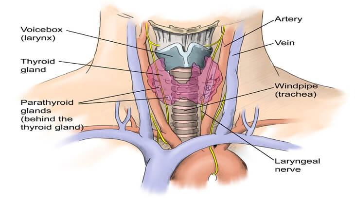 006-labextrade.com-Thyroidectomy2 (1)
