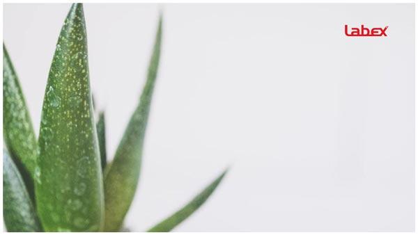 019-labextrade.com-how-to-handle-neck-burns-tightness-after-laryngectomy-treatment-radiation-aloe2