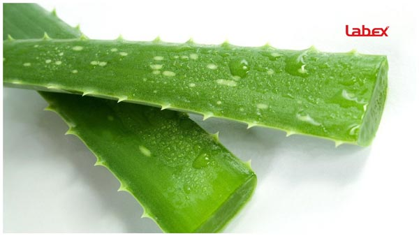 How To Deal With Neck Burns & Tightness After Laryngectomy Treatment & Radiation ALOE 2